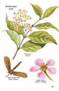 Banisteriopsis caapi, ayahuasca, DMT