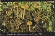 Dung Loving Psilocybe (Psilocybe coprophila).jpg