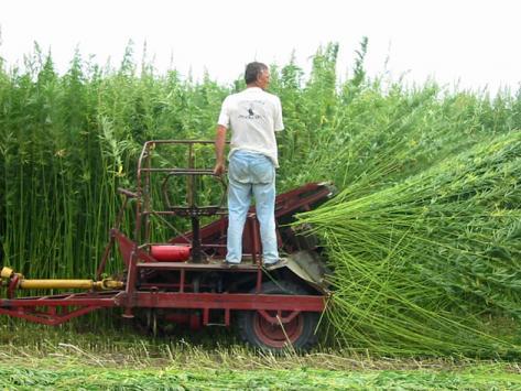 Hemp Harvester, hemp ethanol