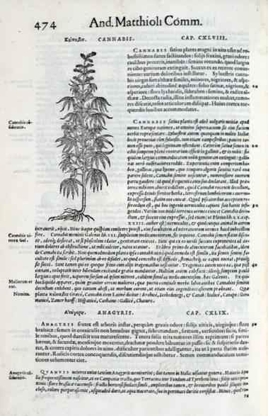 Fuchs Cannabis